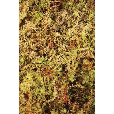 "Mousse sphaigne ""Habitat moss"" Komodo"