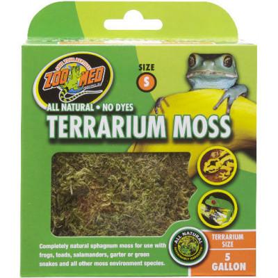 """Mousse de forêt """"Terrarium moss"""" de Zoomed"""