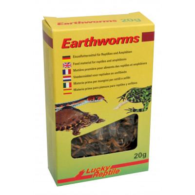 """Vers de terre séchés """"Earthworms"""" de Lucky reptile"""