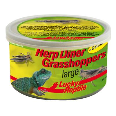 """Sauterelles en conserve """"Herp diner grasshoppers"""" de Lucky reptile"""