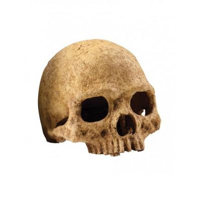 Cachette crâne primate Exo Terra