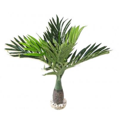 Palmier feuilles longues