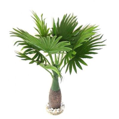 Palmier feuilles rondes