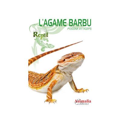 L'agame barbu - Pogona vitticeps - Les guides Reptilmag