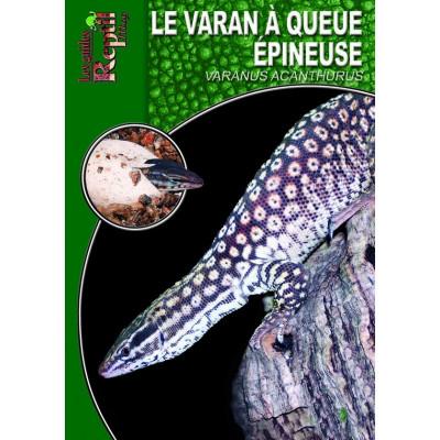 Le varan à queue épineuse - Varanus acanthurus - Les guides Reptilmag
