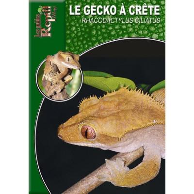 Le gecko à crête - Rhacodactylus ciliatus - Les guides Reptilmag
