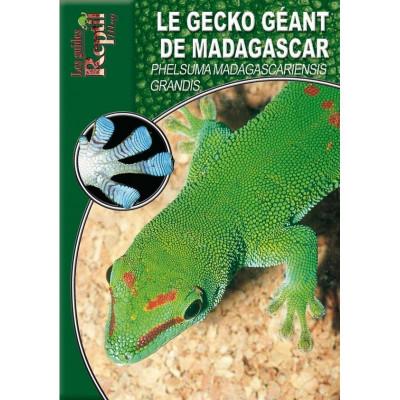 Le gecko géant de Madagascar - Phelsuma madagascariensis grandis - Les guides Reptilmag
