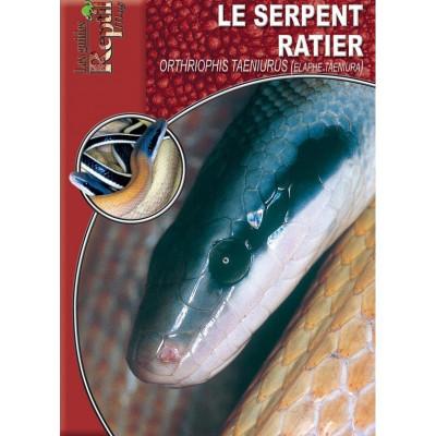 Le serpent-ratier - Orthriophis taeniurus - Les guides Reptilmag