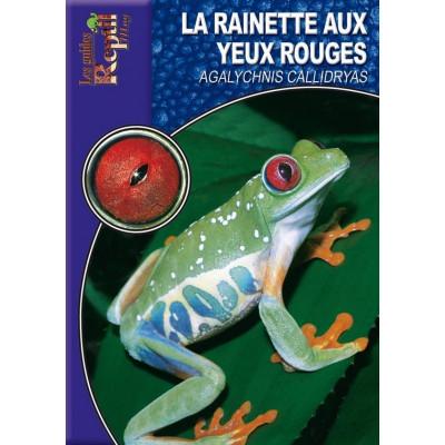 La rainette aux yeux rouges - Agalychnis callidryas - Les guides Reptilmag