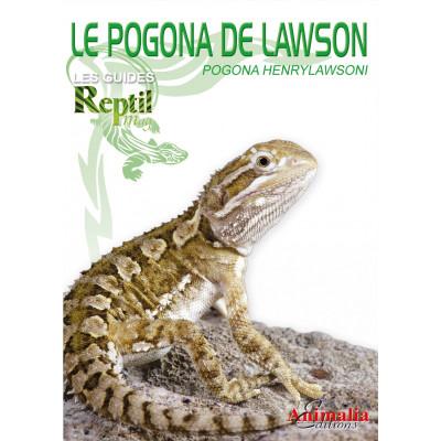 L'agame de Lawson - Pogona henrylawsoni - Les guides Reptilmag