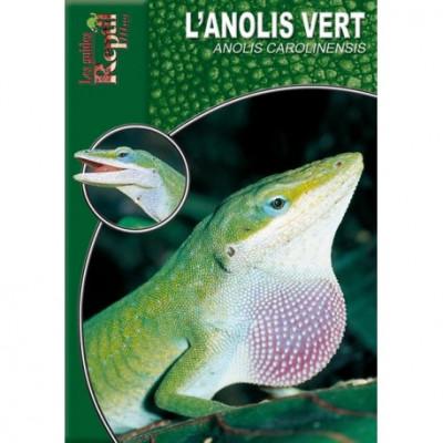 L'Anolis vert - Anolis carolinensis - Les guides Reptilmag