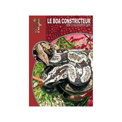 Le boa constricteur - Boa constrictor - Les guides Reptilmag