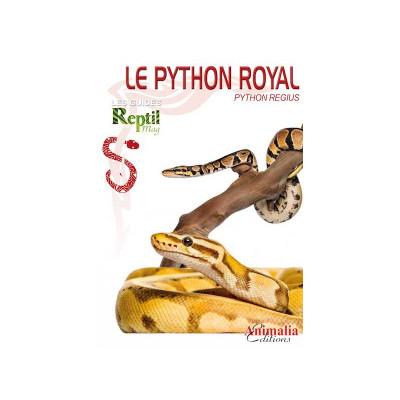 Le python royal - Python regius - Les guides Reptilmag