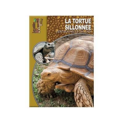 La tortue sillonnée -  Centrochelys sulcata - Les guides Reptilmag