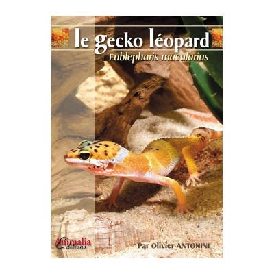 Le gecko léopard - Eublepharis macularius