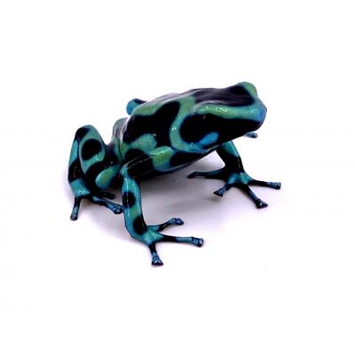 "Dendrobates auratus ""Nicaragua"" F1"