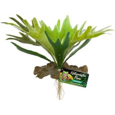 """Plante """"Platycerium"""" de Zoomed"""