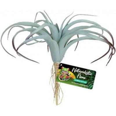 """Plante """"Tillandsia"""" de Zoomed"""
