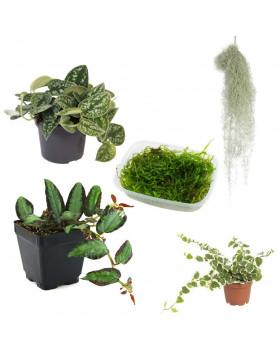 Plantes naturelles - REPTILIS