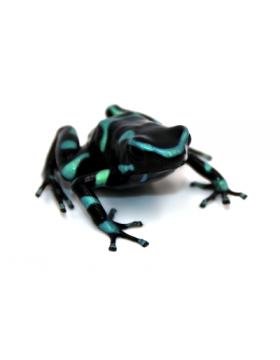 Grenouilles, crapauds, tritons et salamandres - REPTILIS