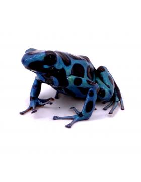 Dendrobates, grenouilles poison - REPTILIS